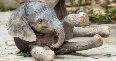 Във Виена се роди слонче