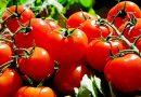 В Япония се продават домати с редактиран геном за лечение на хипертония